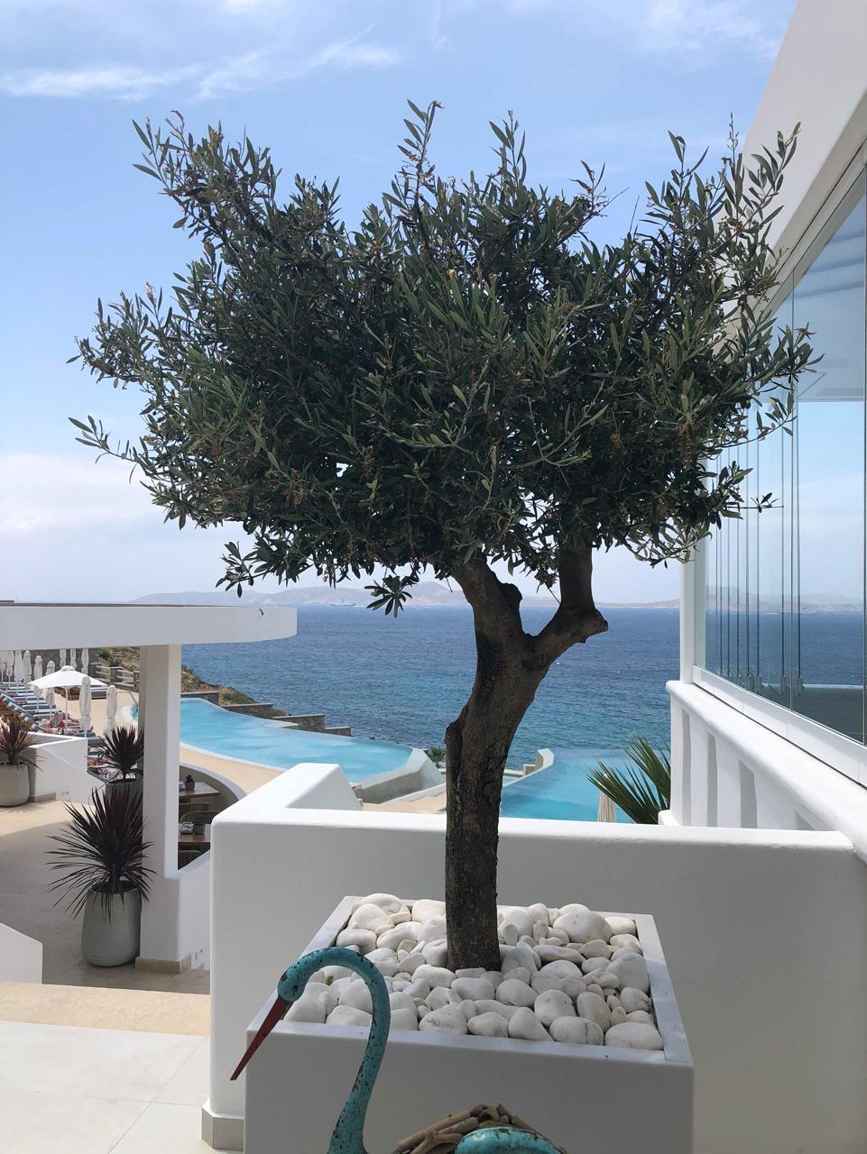 Anax Hotel Mykonos