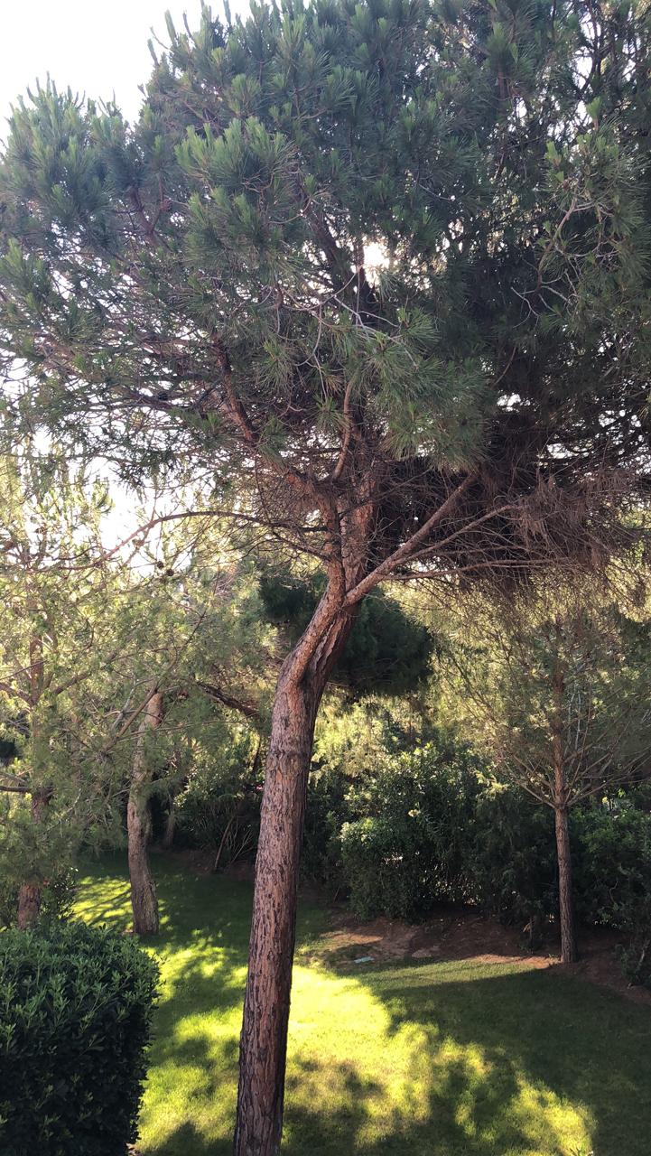 Wunderschöne Natur - Der Pinienwald